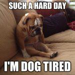 第352期:dog-tired 一组跟狗有关的英语